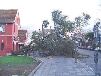 Arbol caido en San Isidro (foto archivo)