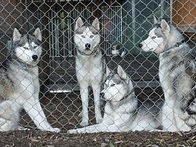 Instan a la población a vacunar a sus mascotas contra la rabia todos los años