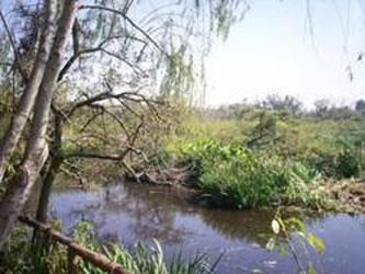 Continuan los festejos por el 20 aniversario de la reserva ecológica de San Isidro