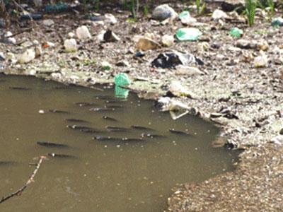 Pese al Coronavirus, el gobierno bonaerense realizará obras de saneamiento del río Luján