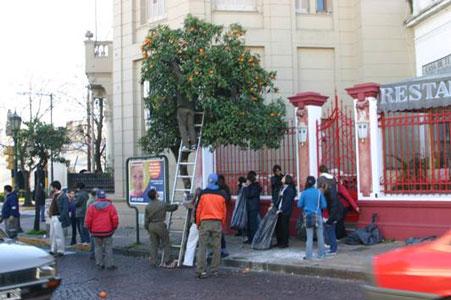 Cosecha de frutas en el cascohistórico de San Isidro