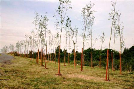 Importante plantación de árboles en el Paseo de la Costa