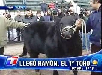 Ingresó Ramón, el primer animal a La Rural
