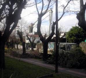 Por el mal tiempo hubo 16 árboles derribados en San Isidro