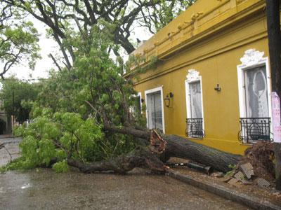 La tormenta derribó numerosos árboles en San Isidro