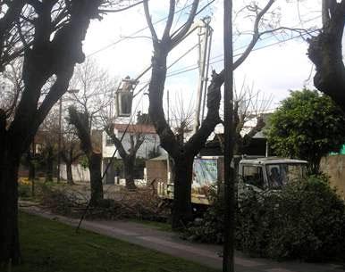 En San Isidro la tormenta de anoche dejó un saldo de43 árboles caidos