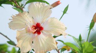 Flor Ganadora en la 46º Fiesta de la Flor