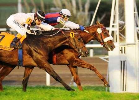 Hipódromo de San Isidro: el gran premio Carlos Pellegrini se correrá con público