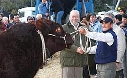 Junior, el primer animal en ingresar a La Rural