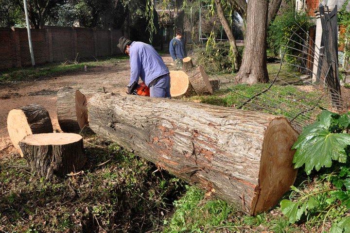 Tormenta: continúan en Tigre las tareas de reconstrucción