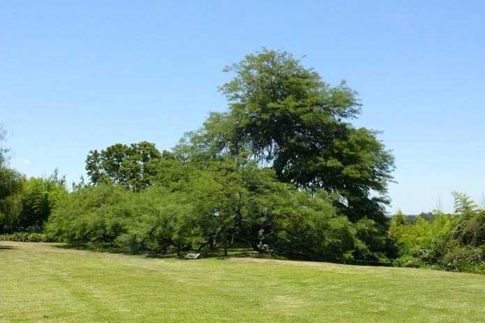 San Isidro tiene sus primeros monumentos naturales
