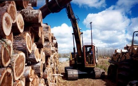Industriales madereros se quejan por falta de competitividad
