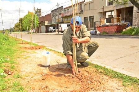 San Fernando está mejorando la forestación del distrito
