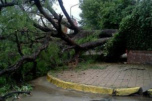 Un fuerte temporal causó destrozos en la Zona Norte