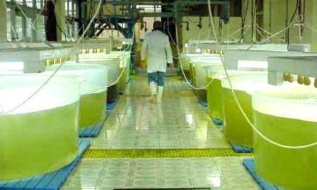 Ford estudia a las algas como potencial biocombustible