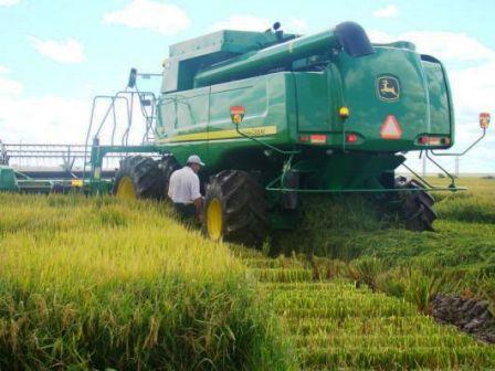 Corrientes, principal productora de arroz del país