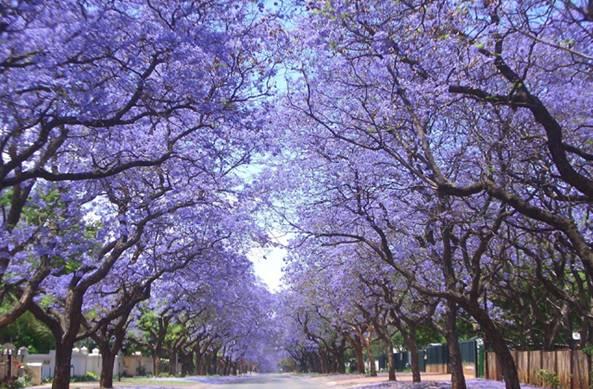Invitan a los vecinos de San Isidro a plantar árboles