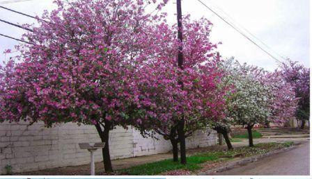Los vecinos de San Fernando pueden solicitar la plantación de árboles en la puerta de su casa