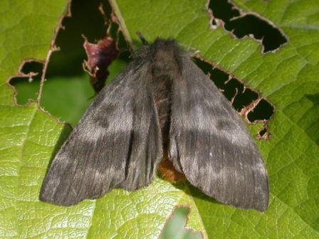 Recomendaciones ante la aparición de mariposas negras