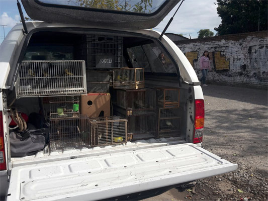 Rescatan a 120 animales que eran comercializados ilegalmente en Pompeya