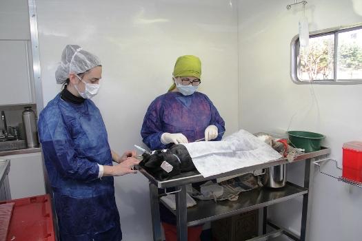En San Isidro vuelve el servicio de castración de mascotas
