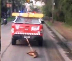 Expulsan a agentes del COT que arrastraron a un perro