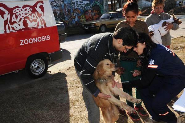 Zoonosis continúa cuidando las mascotas de Tigre en noviembre