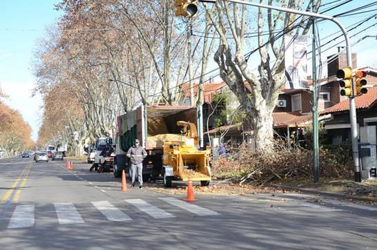 En San Isidro finalizó la campaña de poda para proteger el arbolado