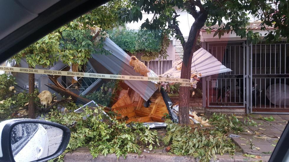 Más 280 árboles caídos e innumerables destrozos por el temporal en Vicente López
