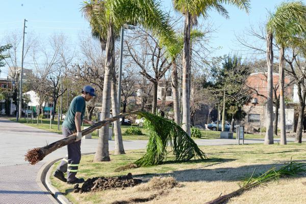 San Fernando colocó 50 nuevas palmeras en la Plaza de los Inmigrantes Italianos