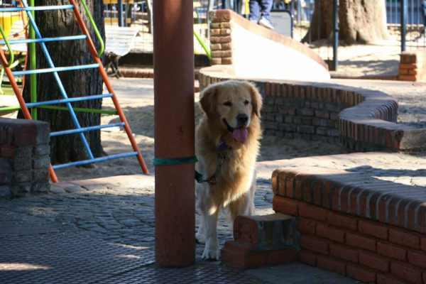 Habrá caniles para mascotas en las plazas de San Isidro