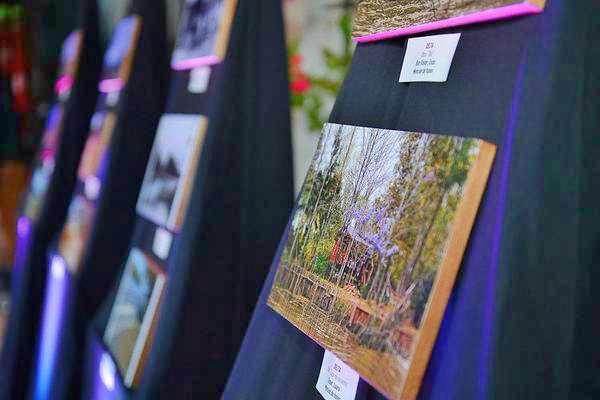 """El Concurso Fotográfico """"Tigre, cuna del Remo"""" ya tiene a sus ganadores y finalistas"""