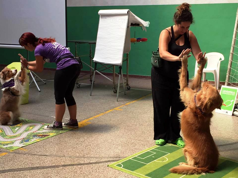 Continúa desarrollándose el programa Buenos Vecinos Caninos en Vicente López