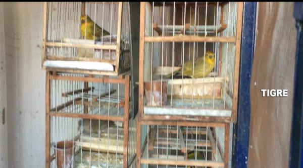 El COT la detuvo por vender aves exóticas y silvestres en Facebook