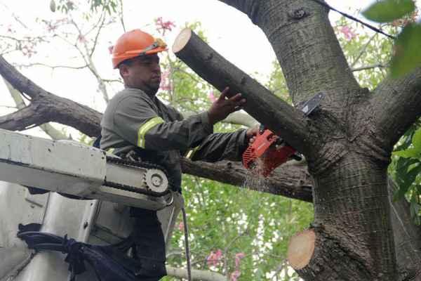 Comenzó el período para solicitar podas de árboles en Vicente López