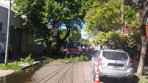 El municipio realizó trabajos de poda correctiva en Tigre centro