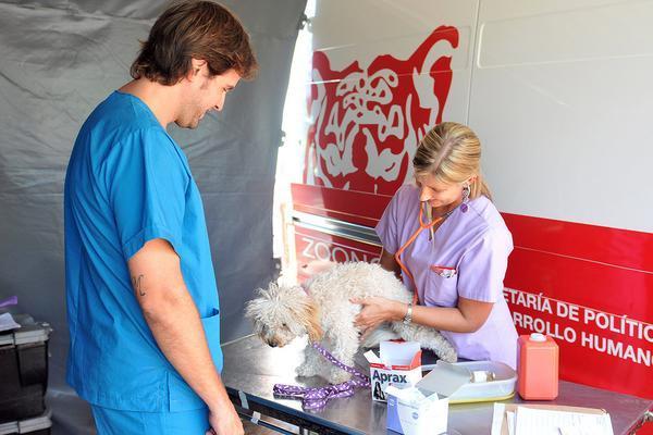 El Centro de Zoonosis de Tigre atiende gratuitamente a más de 500 animales por mes