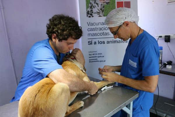 San Isidro: Cronograma de castración y vacunación gratuita de mascotas en julio