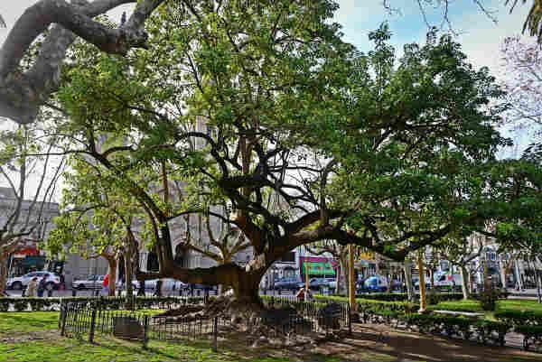 San Fernando realiza el primer censo del estado y salud de su arbolado público