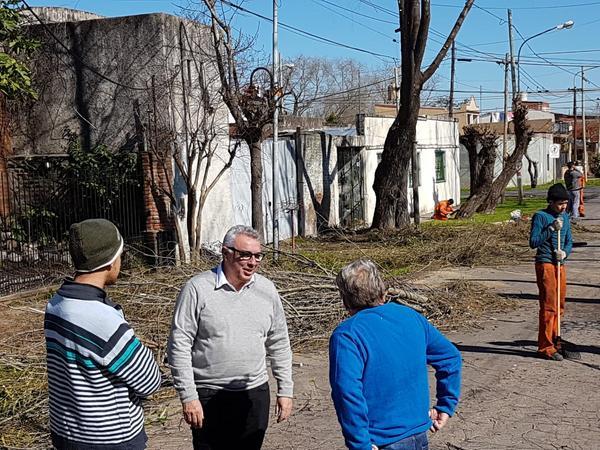 En todo Tigre ya se podaron más de 15.000 árboles