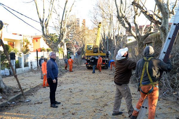 Refuerzan los trabajos de poda en Tigre centro