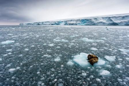 Greenpeace: El G20 subestima las amenazas del calentamiento global