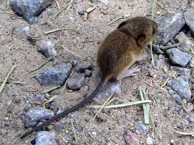 Recomendaciones ante el brote de hantavirus en la región patagónica.