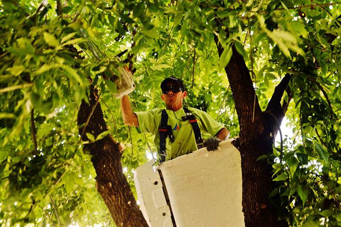San Fernando realiza trabajos de despeje de luminarias y cámaras de seguridad.
