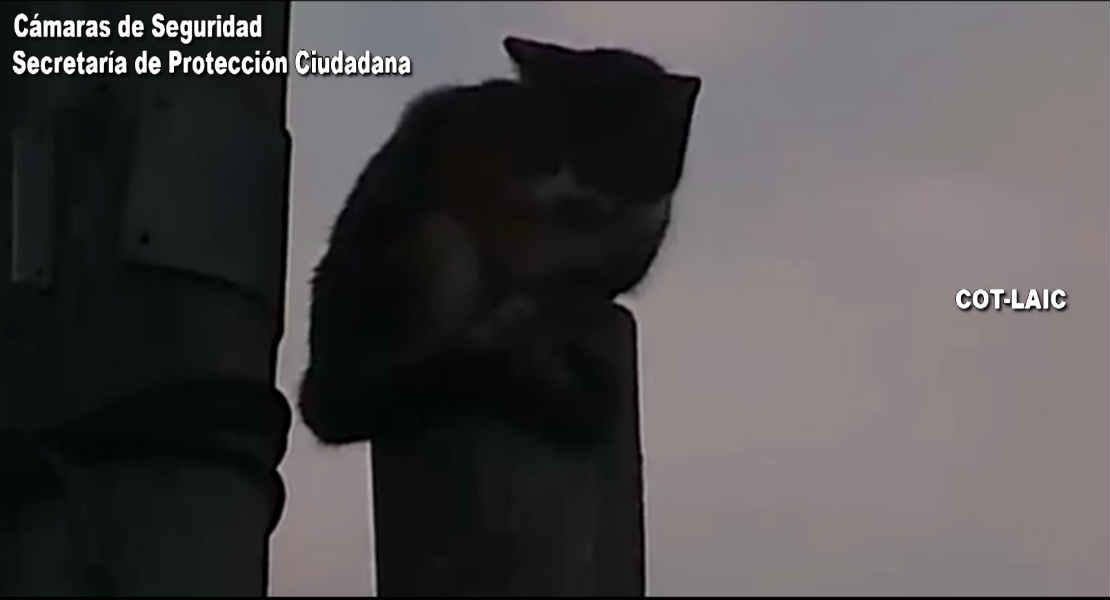 Tigre: Rescatan un gato atrapado en las alturas