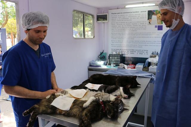 San Isidro: castración y vacunación gratuita de mascotas durante junio