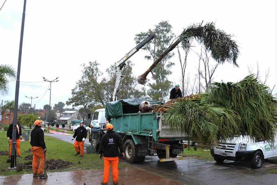 El Municipio de Tigre lleva más de 1.300 árboles plantados
