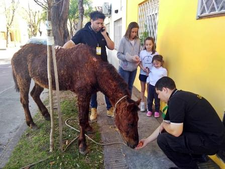 San Fernando rescató a un caballo con muy mala salud que era utilizado como animal de carga en la vía pública