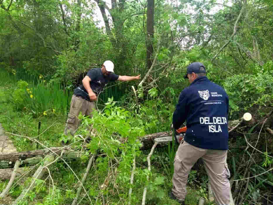 Tigre realizó un operativo de destronque en el Delta