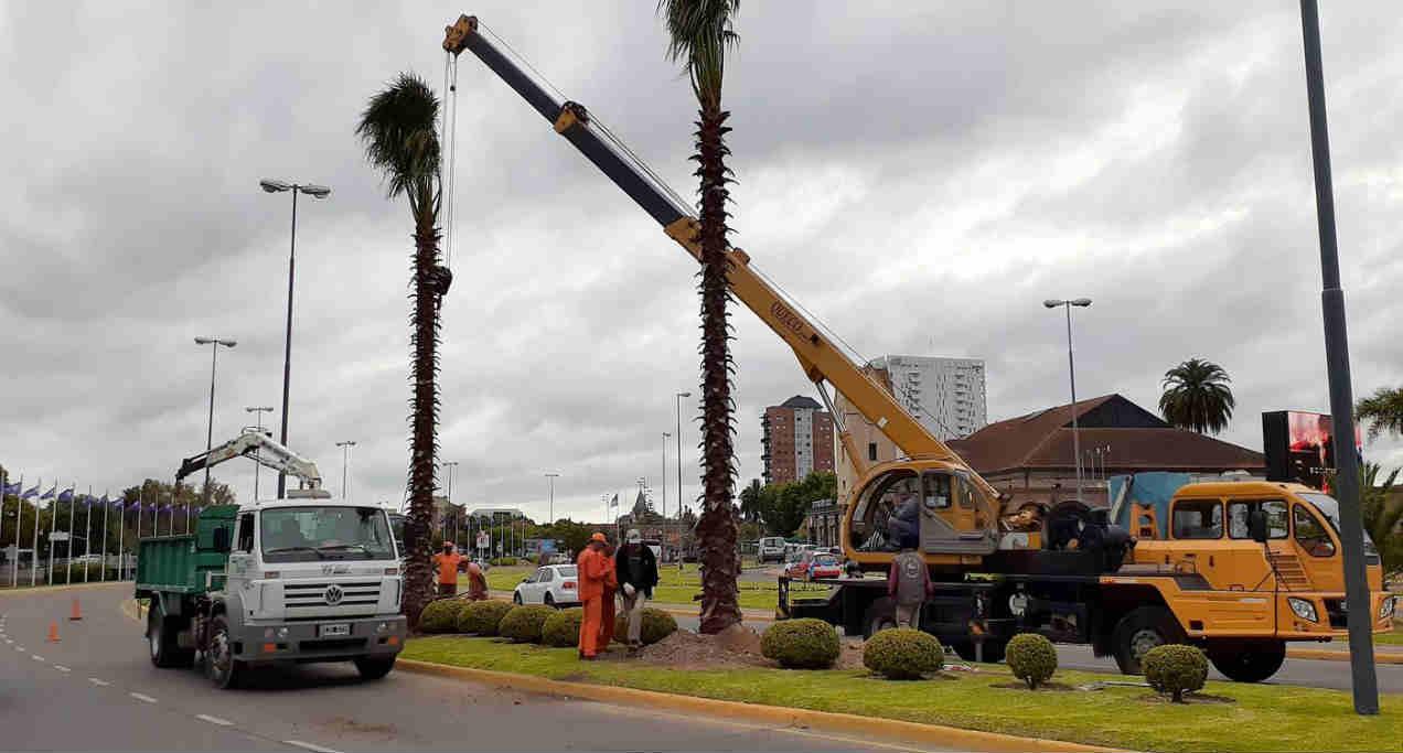 Tigre incorporó nueva forestación en la Avenida Ubieto